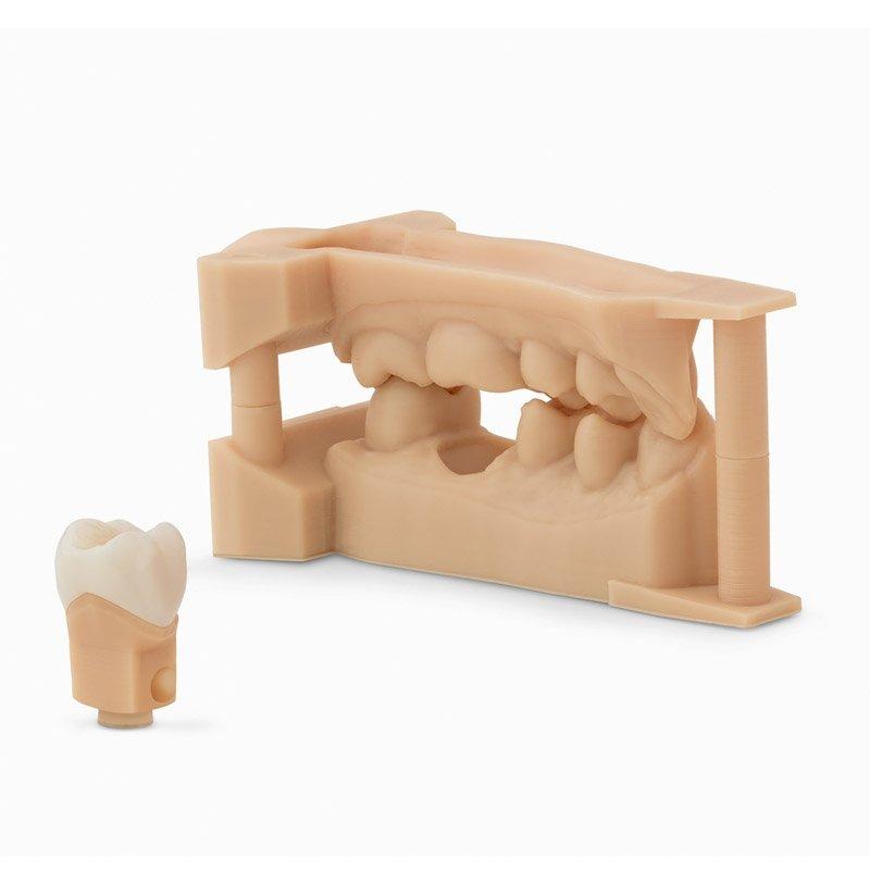 r sine dental model form 2 cartouche r sine formlabs. Black Bedroom Furniture Sets. Home Design Ideas