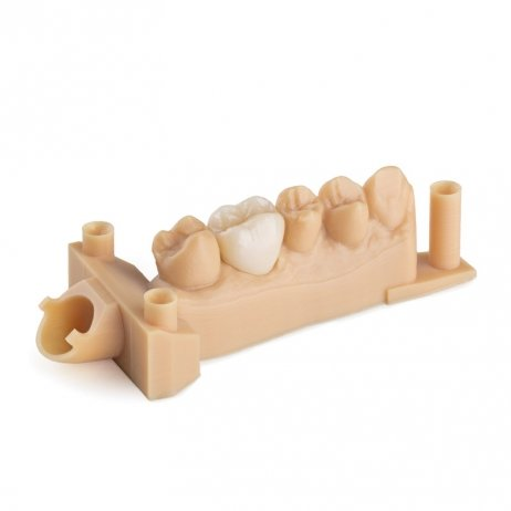 Cartouche Résine Form 2 Dental Model 1L